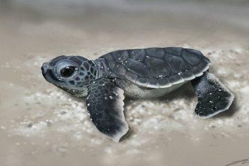 Hình nền rùa con ngộ nghĩnh và đáng yêu