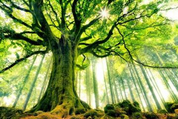 Đời sống bí mật của cây cối