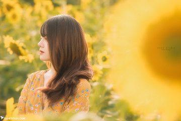 Hoa Hướng Dương | Vẻ đẹp trong sáng